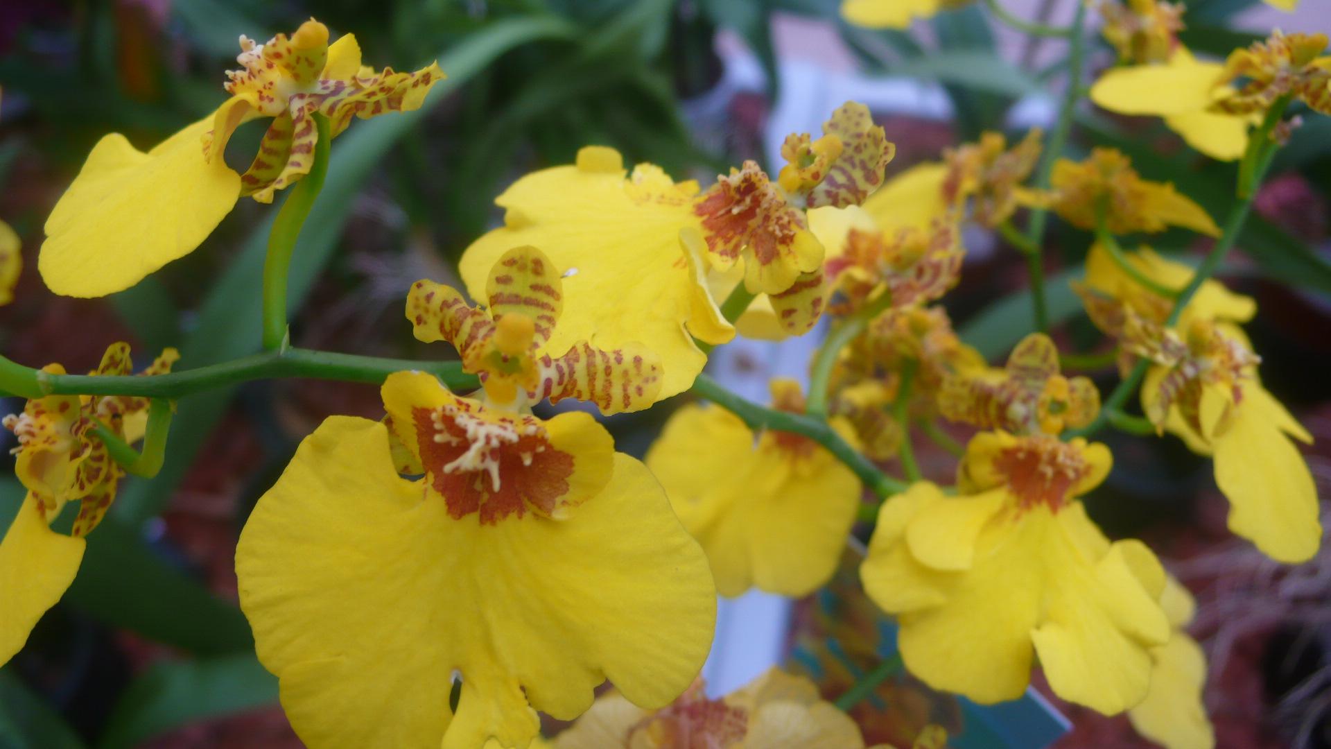 ein nettes radiogespr ch ber orchideen heike boomgaarden. Black Bedroom Furniture Sets. Home Design Ideas