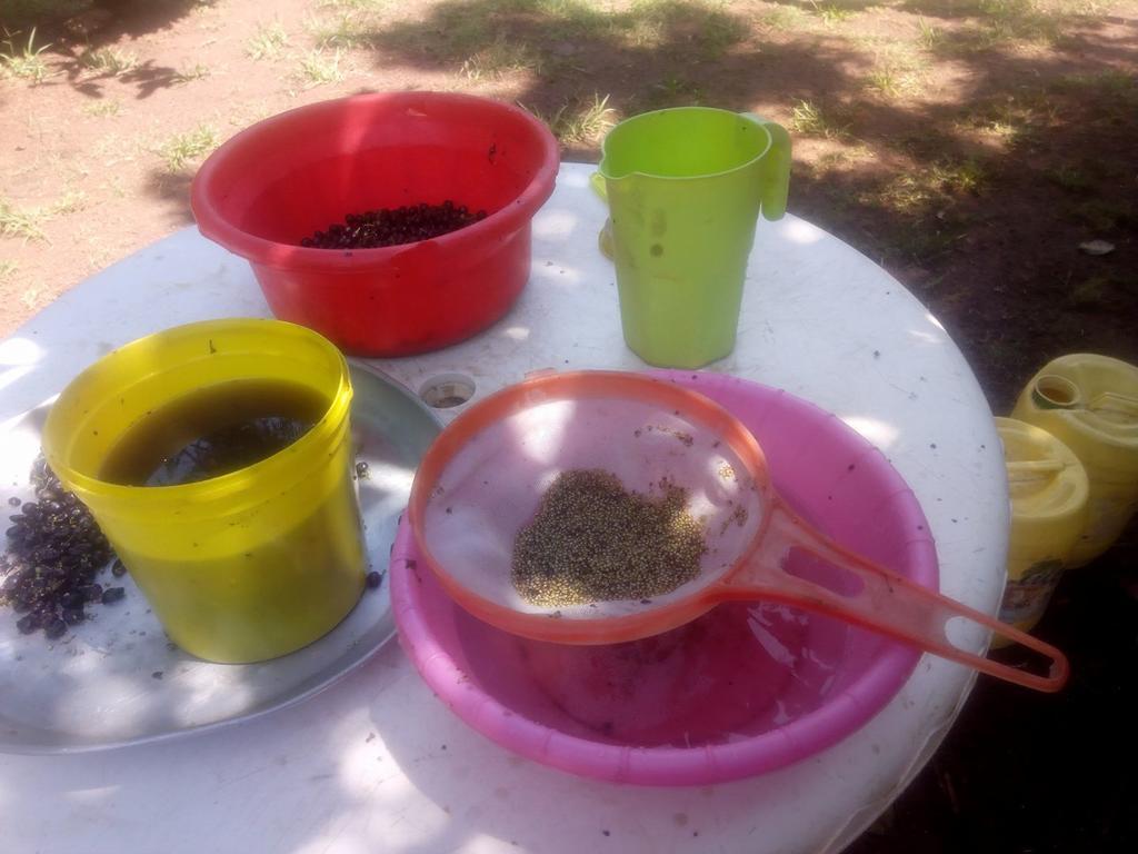 Saatgutvermehrung