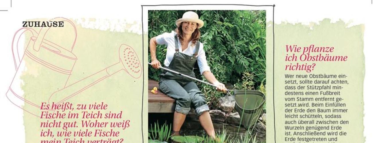 Welche Pflege brauchen meine pflanzen jetzt? Heike Boomgaarden gibt Antworten.