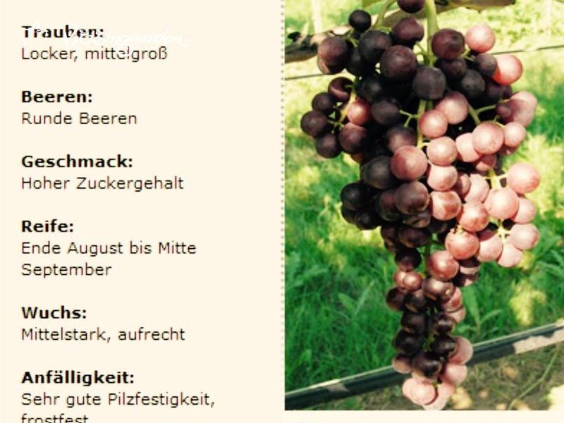 HeikeBoomgaarden