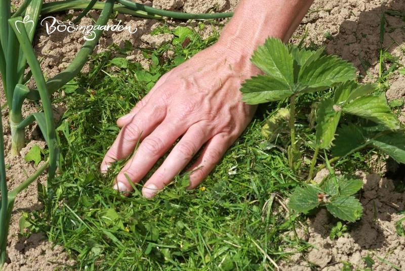 Rasen kann gut als Mulch verwendet werden
